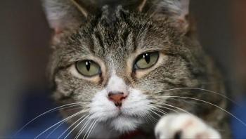 مثل البشر.. القطط أيضا ينتقل إليها فيروس كورونا