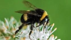 """""""النحل ينقرض"""".. هل تلك هي نهاية البشرية؟"""